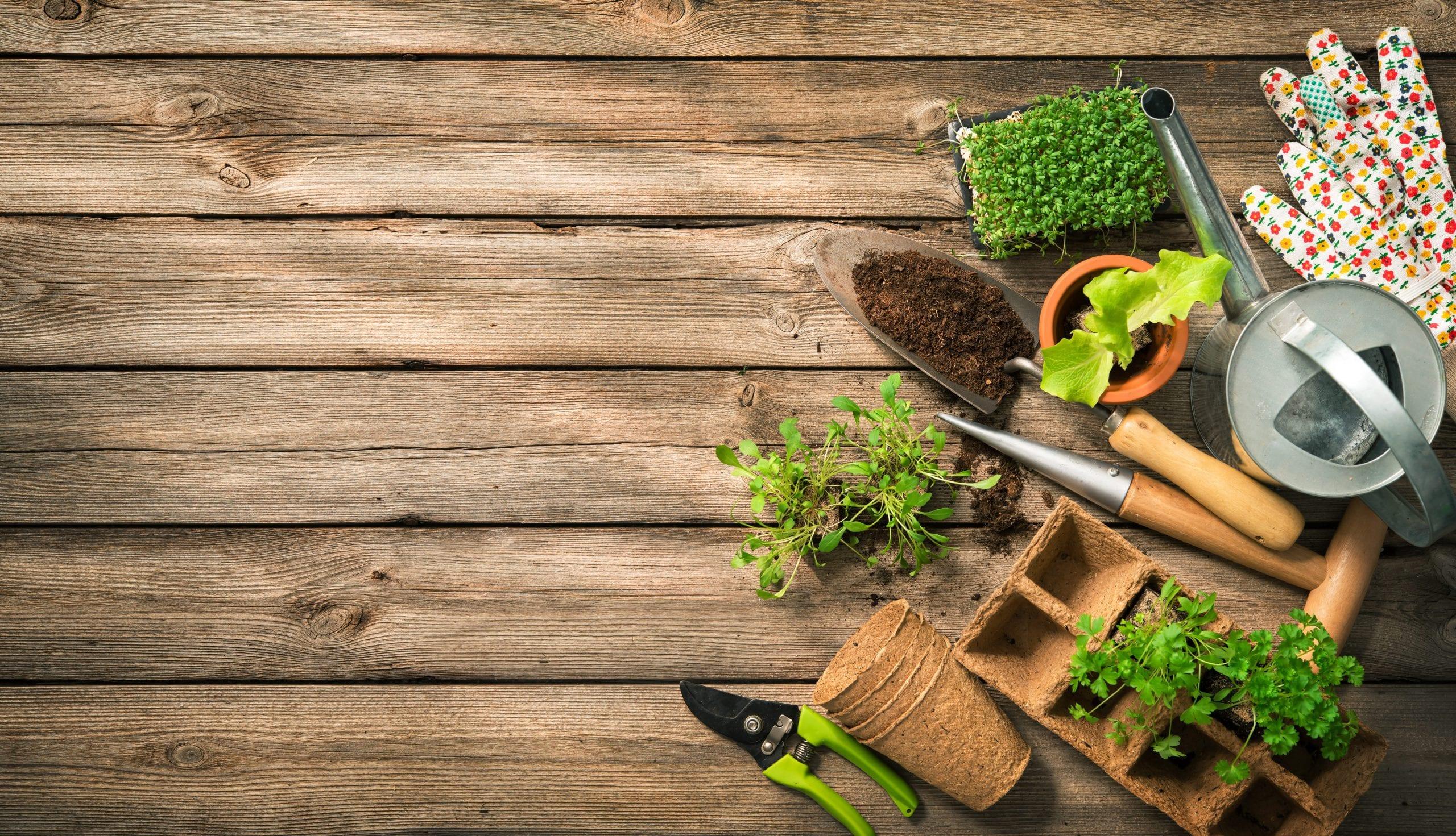 garden tools buying guide